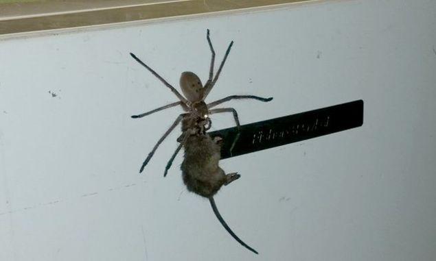 big-spider1