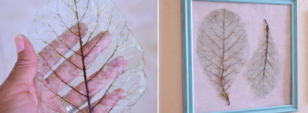 How To Make DIY Color Tinted Skeleton Leaves. When Science Meets Crafting!