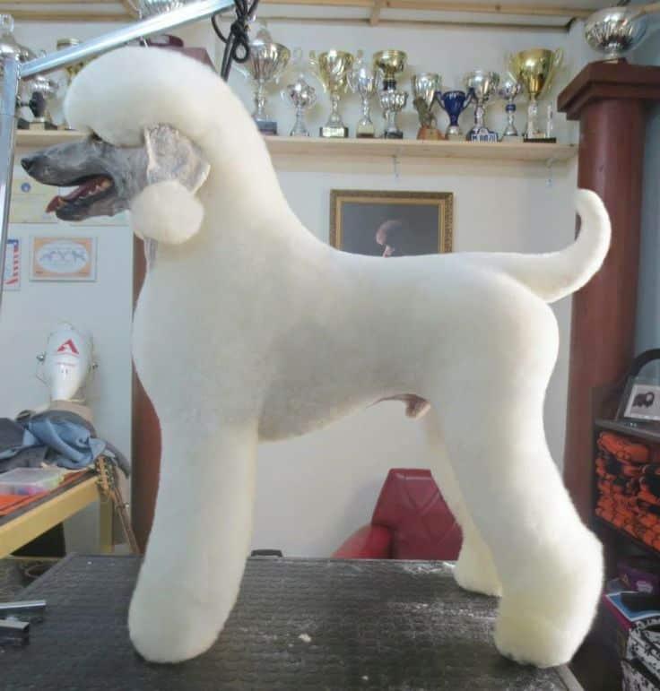doghair11