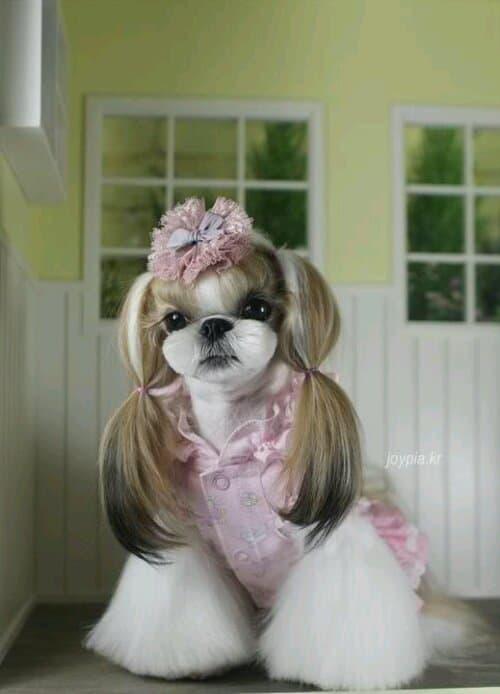 doghair12
