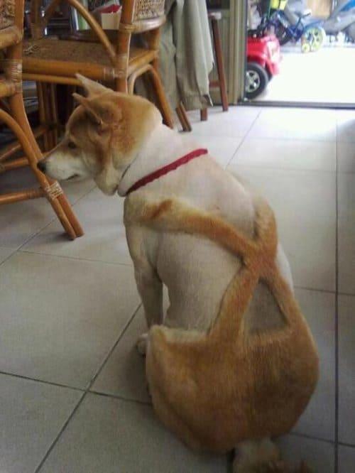 doghair16