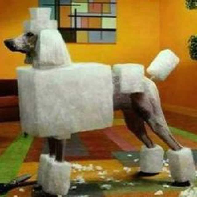 doghair17