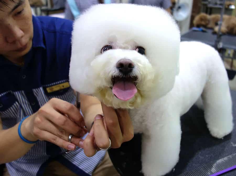 doghair2