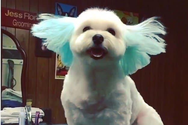 doghair21