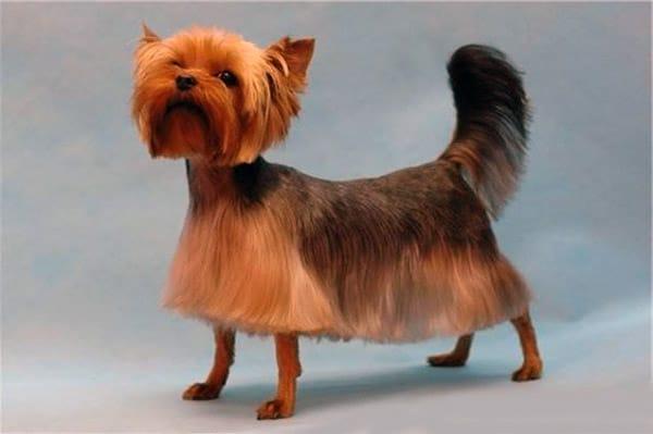doghair22