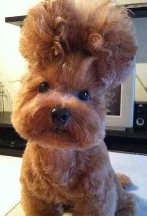 doghair5