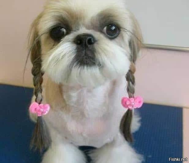 doghair8