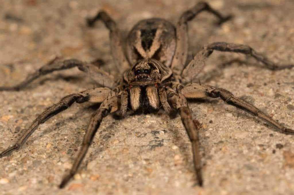 7 Of The World's Most Poisonous Spiders And Where You Can ...