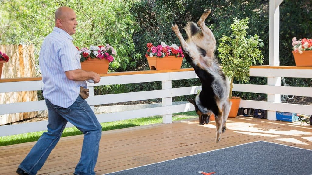 best trained dog