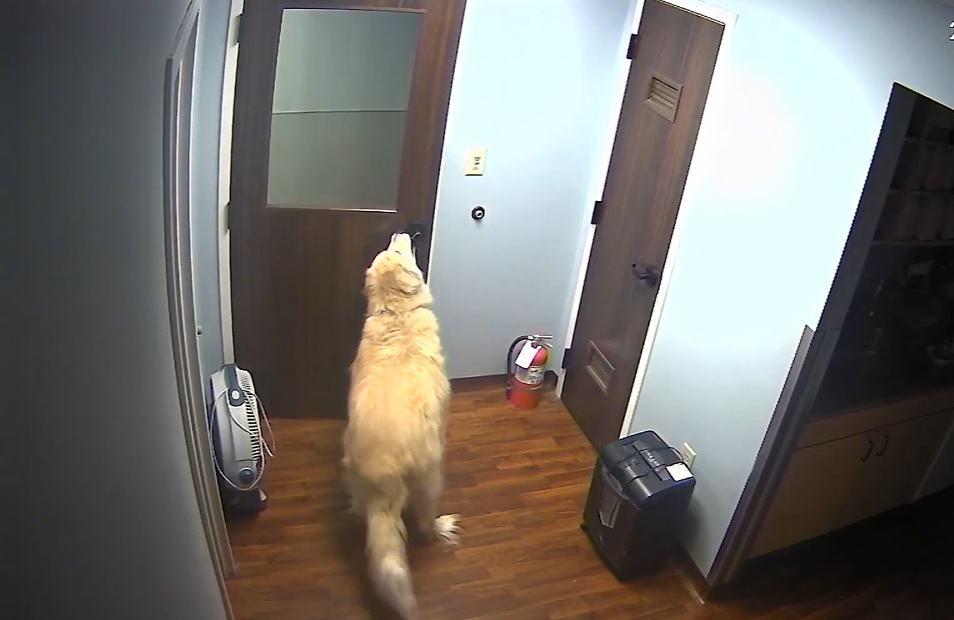 dog escapes animal hospital