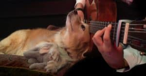 guitar green day dog