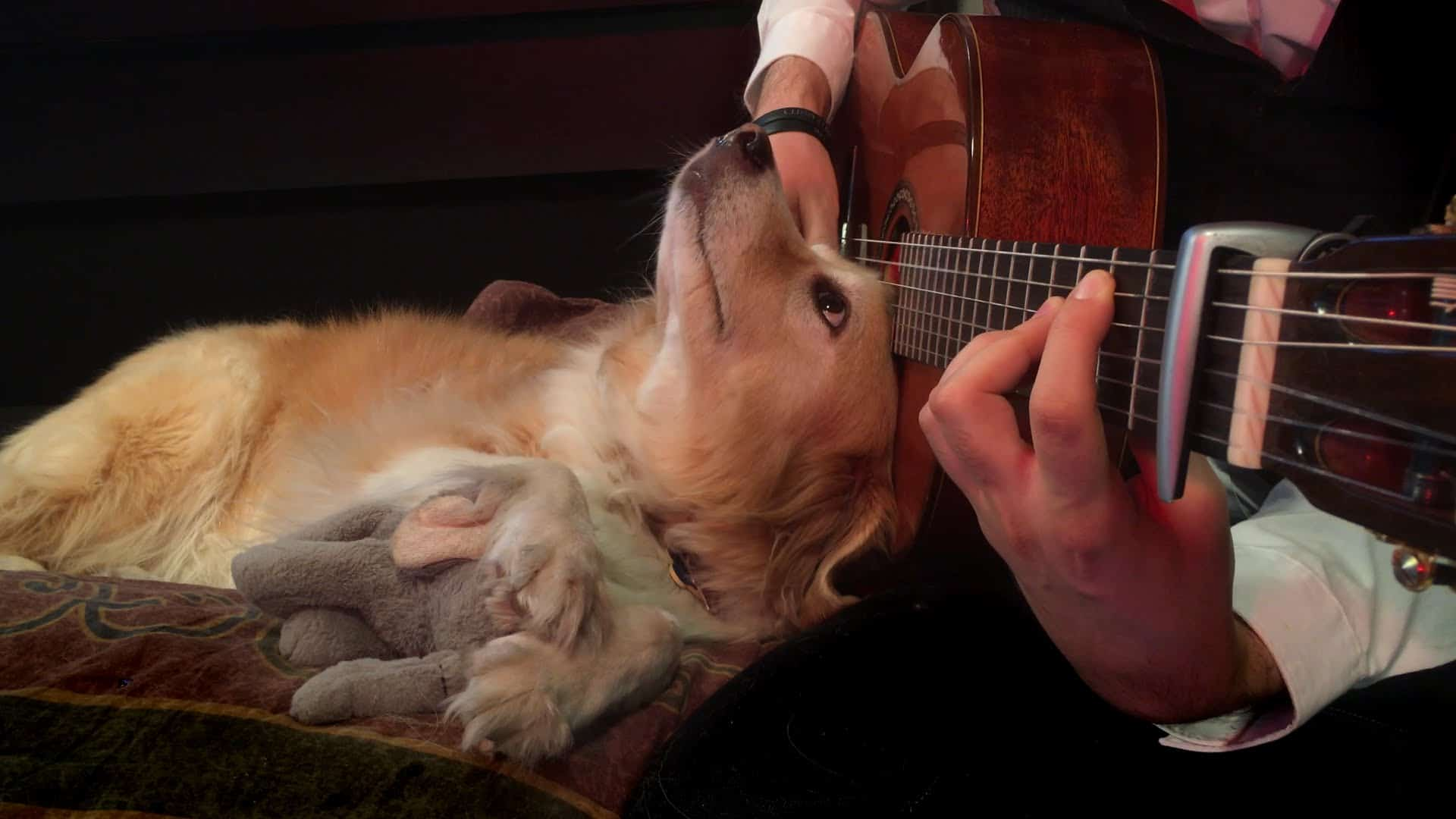 Classical Music Good For Dogs