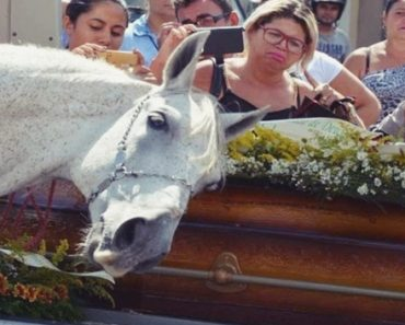 horse funeral