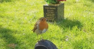 mother son grave bird