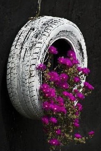 Old-tire-made-into-flower-pot.jpg