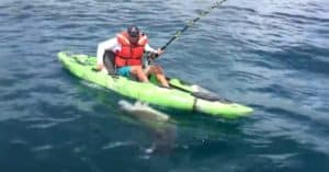 shark fishing kayak