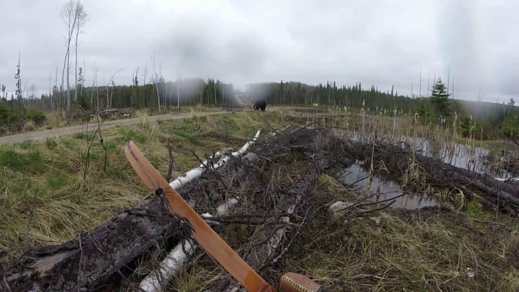 black bear attacks hunter