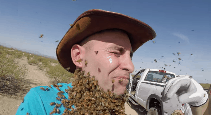 Coyote Peterson bees
