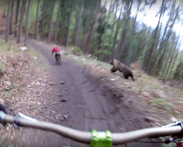 Grizzly bear chases biker