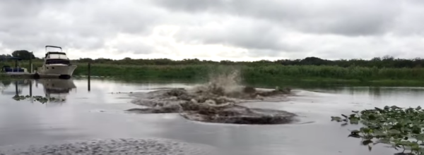 Every Time Man Throws Bucket Of Water Into River, Underwater Creatures Freak Out!