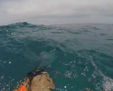 shark attack key west