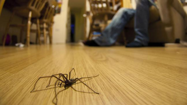 How To Get Rid Of Spiders Using Natural, Essential Oils