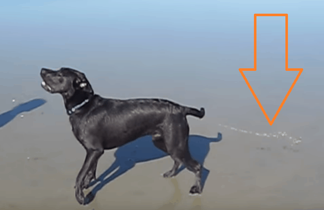 dog squirts water butt