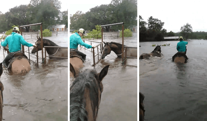horse water rescue texas