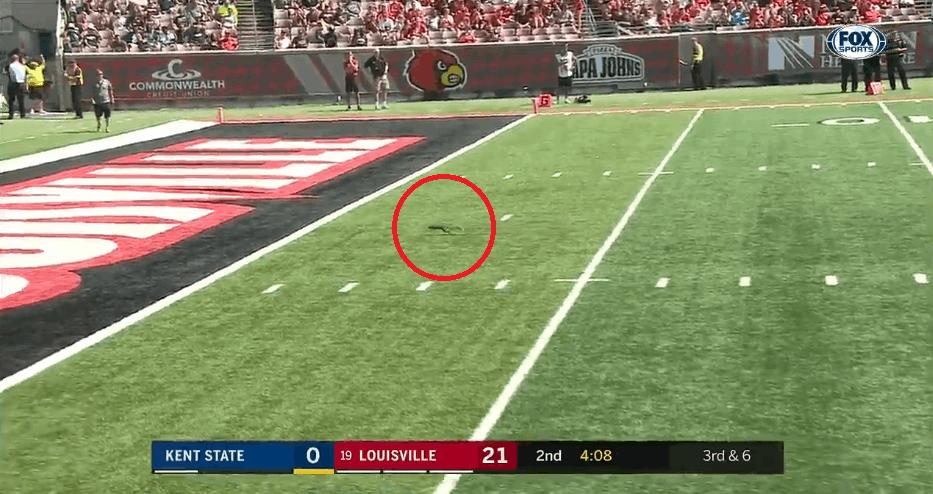 Squirrel touchdown football