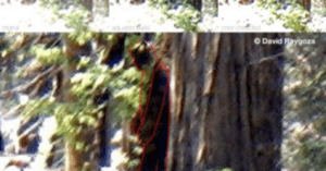 Bigfoot Sighting Fresno California