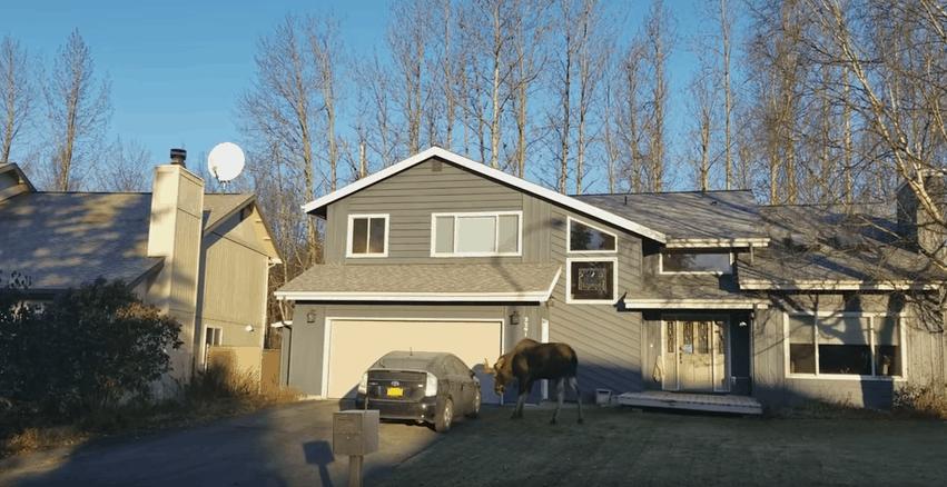 moose prius car