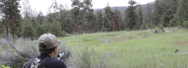 Hunters Capture The Haunting Screams Of A Mountain Lion Hiding Nearby