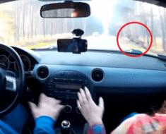 car crash deer video