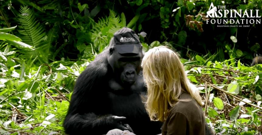 Damian Aspinall gorillas wife