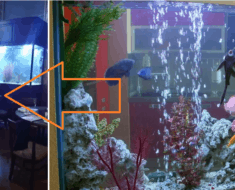 Restaurant's Giant Aquarium Cracks AwesomeJelly