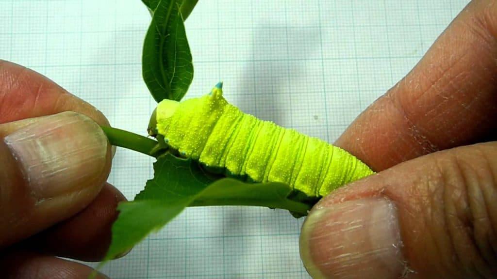 caterpillar squeak noise defense