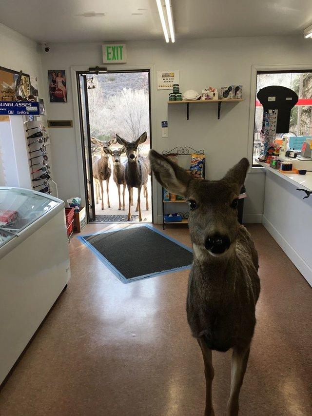 deer inside store