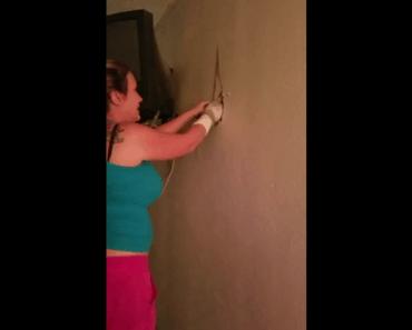 cats kittens hidden inside wall