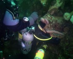 Octopus Engulfs Scuba Diver