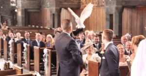 owl delivers wedding rings