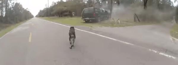 Body Camera Video Shows Florida Deputy, K9 Split Up To Catch Suspects