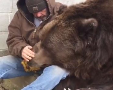 sick grizzly bear