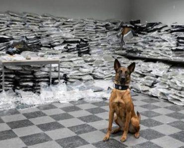 10 million marijuana bust