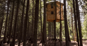 rotating tree house
