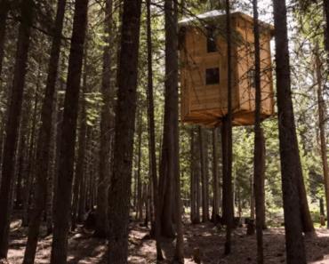rotating tree house